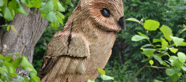 Community Orchard Owl